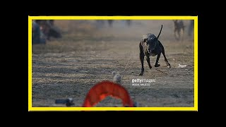 Breaking News | Fake news: Russia dog execution image actually shot in Pakistan (PHOTO)