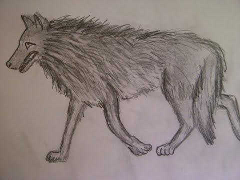 Видео как нарисовать Серого волка поэтапно