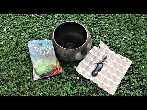 214. Табачный дым против вредителей в теплице. Безопасное средство.
