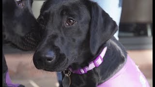 Assistance Dogs Northern Ireland- A Gift for Life