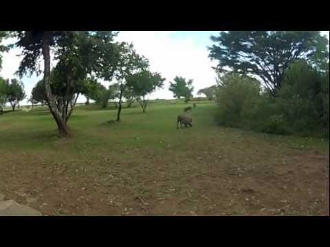 Kenya: Masai Mara and El Karama nemzeti parkok