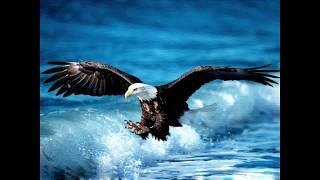 Suara Burung Elang Gacor Paling Merdu 2018