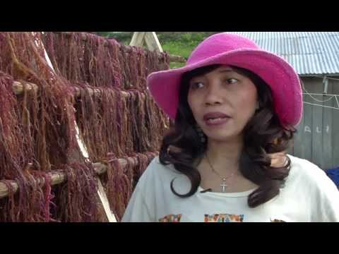 West Papua: Saved By Seaweed video