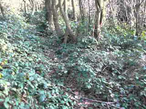 Serra's Forest, An Erotic Adventure video