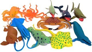 Learn Sea Animal Names! Sharks Whales Fish Sea Creatures Water Ocean Animals Learn Colors
