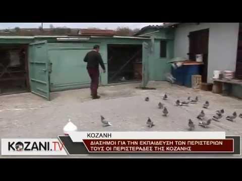 Οι περιστεράδες της Κοζάνης εκπαιδεύουν τα περιστέρια τους