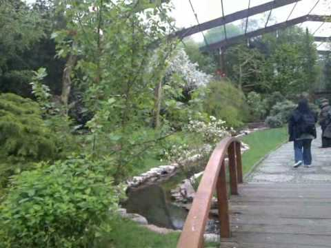 Birdpark Walsrode: Freiflughalle (ibis, spoonbills, ducks, guineafowl etc.)