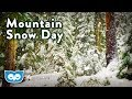 Heavy Snow falling in the Forest - Relaxing Nature Scene