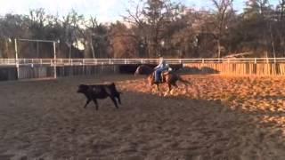 Coco1- Jared Lesh cowhorses