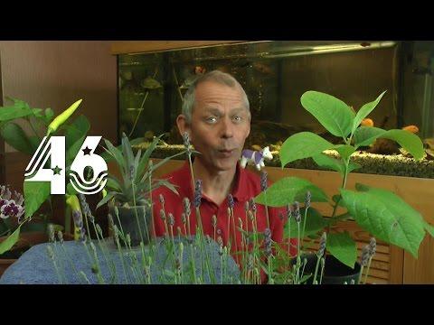 Die Sämlinge und wie geht es weiter mit den Exoten und anderen Pflanzen Teil 46