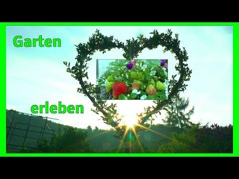 Garten Bonsai Inspirationen der Pflanzen Eindrücke erleben und genießen Garten im Wandel