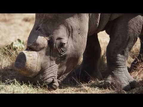 South Africa's Dangerous Proposal to Legalize Rhino Horn