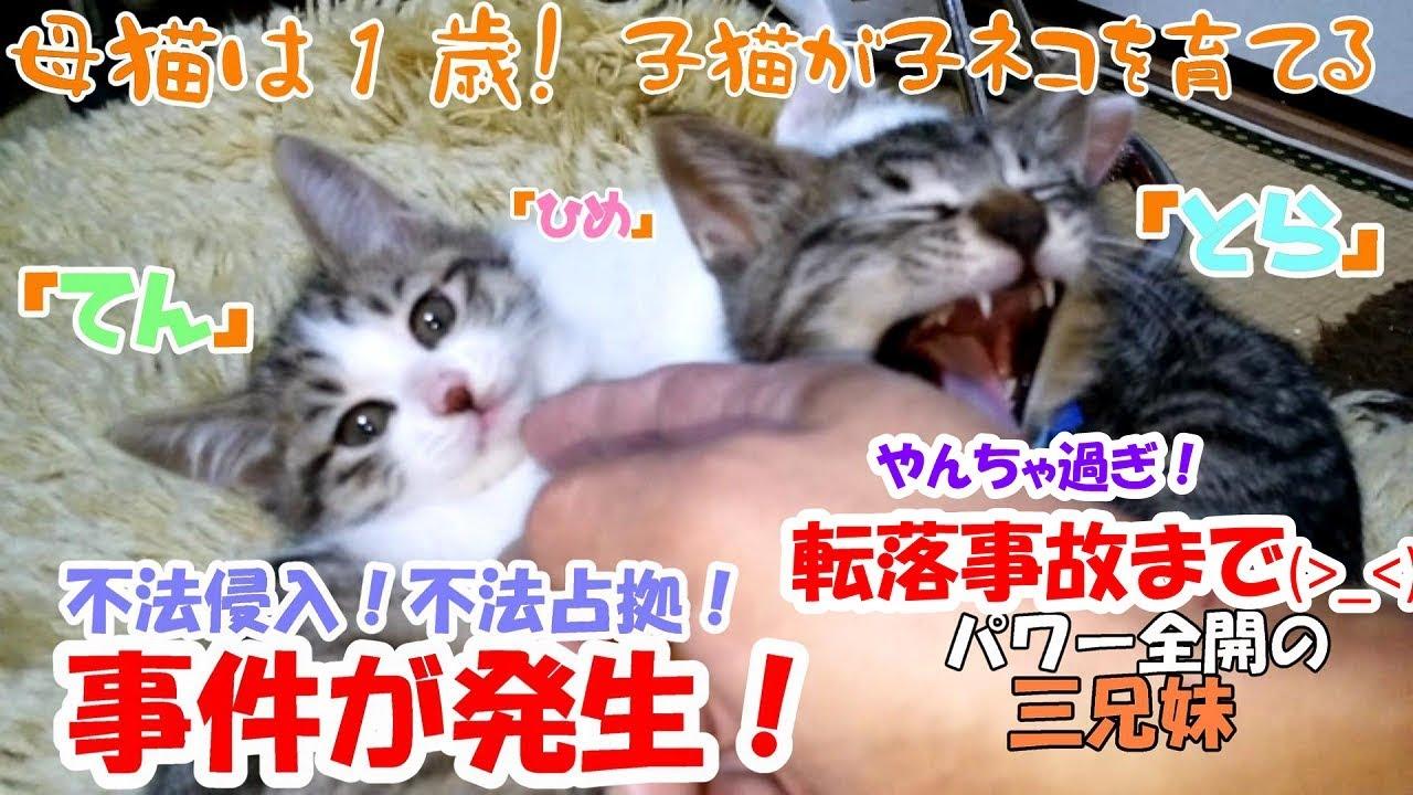 猫 赤ちゃん 事故