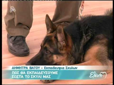 Πως θα εκπαιδεύσουμε σωστά το σκυλί μας -