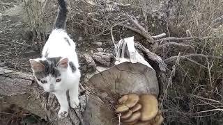 Av kedisi ceviz mantarını buldu