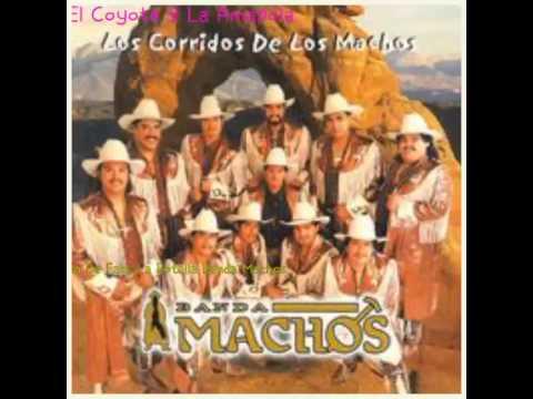 Banda Machos-  El Coyote Y La Amapola