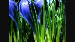 Watch Pooh Sticks Susan Sleepwalking video