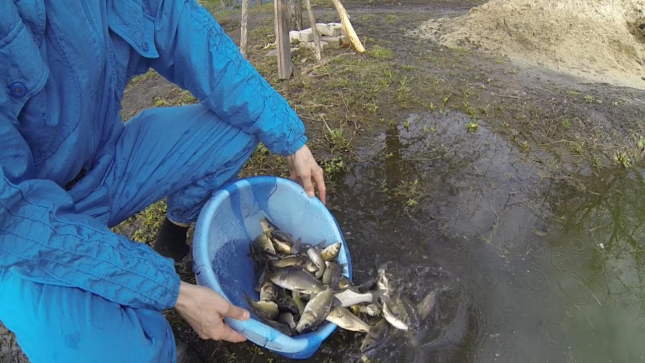 Выращивание карпов в маленьких прудах 147