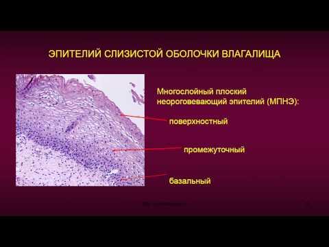utolshenie-epiteliya-vo-vlagalishe