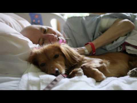Animal-Assisted Therapy- The Healing Power of Animals
