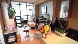 Harlem Shake edición canina