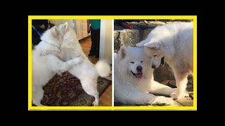   Dog Rescue StoriesDogs Who Bonded On A Korean Meat Farm Are Reunited For The First Time Since T...