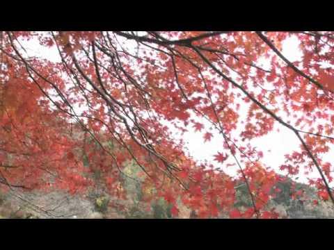 山県市 「伊自良湖」 ~紅葉~