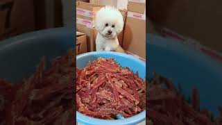 Look at these cute and funny puppies dogs 1652
