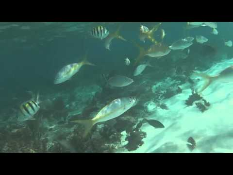 Ocean of Plastic URI Conservation Biology