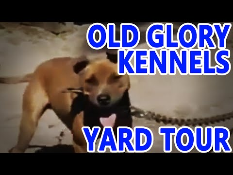 OLD GLORY Kennels | YARD TOUR
