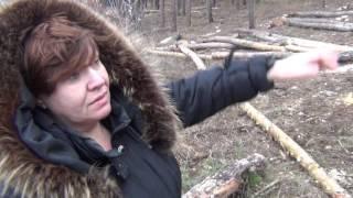 Незаконная вырубка леса.Мэр Сабадаш  набрал