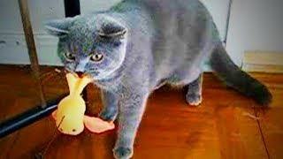 Naughty Cats 😜🐱 Funny Bully Cats (Part 1) [Funny Pets]