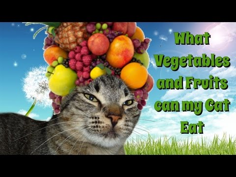 What Fruits and Vegetables can my Cat Eat