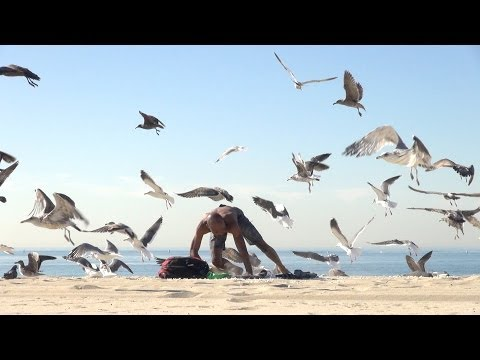Crazy Bird Prank!!