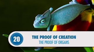 Video: Biology & Human Organs prove God - Quran Miracle