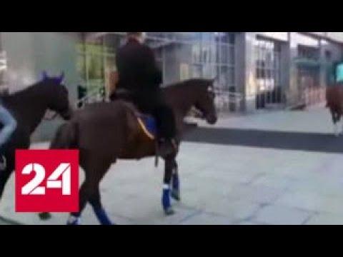 Камчатский депутат приехал на заседание верхом на коне - Россия 24