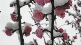 高橋真梨子 カバー - 「FOR YOU...」 英語版