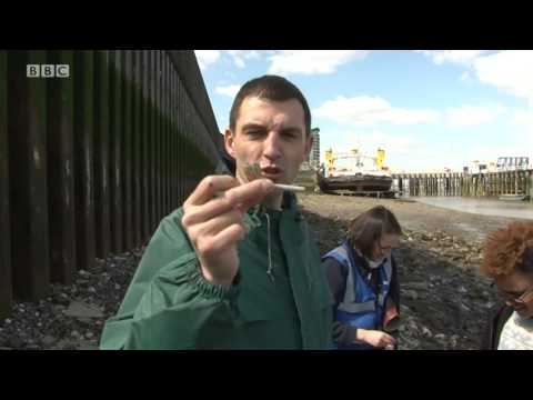Local Hero Day 2: Cleaning River Thames - Westwood