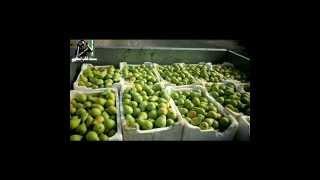 احمد القسيم عيني عليهم - Durée: 4:00.
