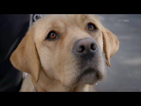 הגורים הטובים ביותר | yes דוקו