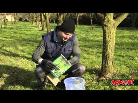 Agrecol - Bielenie Drzew
