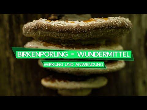 Birkenporling - Wirkung und Anwendung