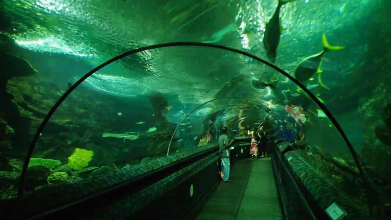 Underwater World, Sentosa, Singapore - YouTube