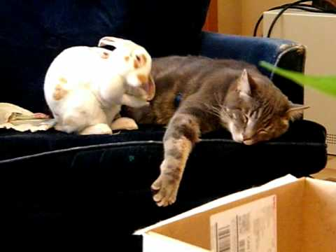 Rabbit and Cat love