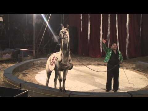 CIRCO ONTARIO, El pequeño gran circo