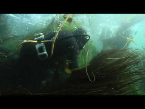 Fisherman catching avalon in Isla Natividad 10sec