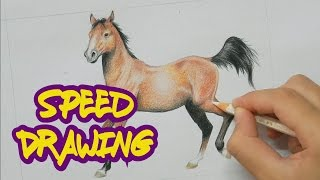 Speed Drawing - Cavalo / Horse