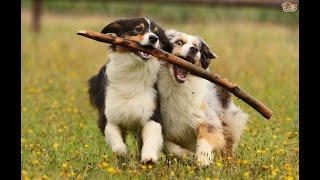 หมา แมว สัตว์ตลกขำๆ | Moment animal my funny and cute pets