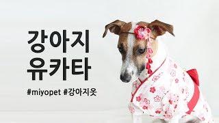 강아지 옷입히기 유카타 기모노  Dog wearing clothes kimono yukata and Drink warter / Miyopet Pet fashion