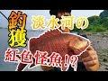 釣獲!淡水河の紅色怪魚!? 岸拋|路亞|海釣
